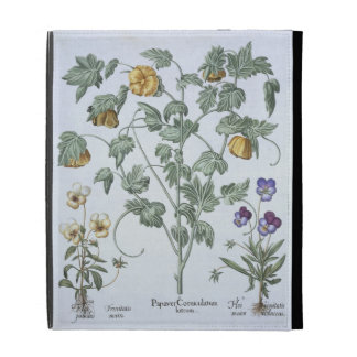 Yellow Horned Poppy, from the 'Hortus Eystettensis iPad Folio Cases