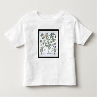 Yellow Horned Poppy, from the 'Hortus Eystettensis Toddler T-Shirt