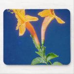 yellow Huapala (Pyrostegia ignea) flowers Mouse Pads