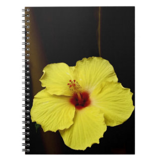 Yellow huge gorgeous hibiscus Chinese rose flower Notebooks