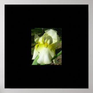 Yellow Iris Art Print Photo - Customized
