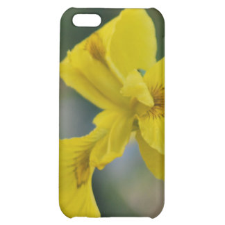 Yellow iris flower and meaning iPhone 5C covers
