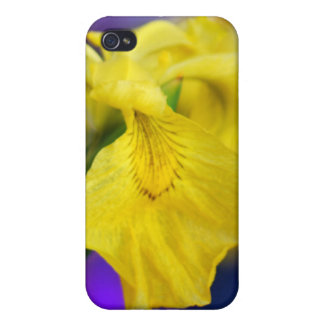 Yellow iris flower and meaning cases for iPhone 4