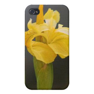 Yellow iris flower iPhone 4/4S cover