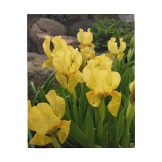 Yellow Iris flowers Wood Wall Art