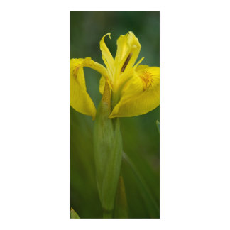 Yellow Iris 4x9.25 Paper Invitation Card