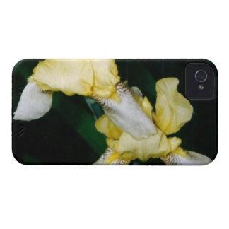 Yellow Iris iPhone 4 Case-Mate Case