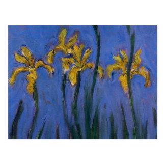 Yellow Irises Postcards