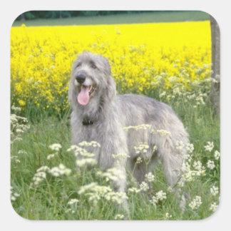 yellow Irish wolfhound flowers Sticker