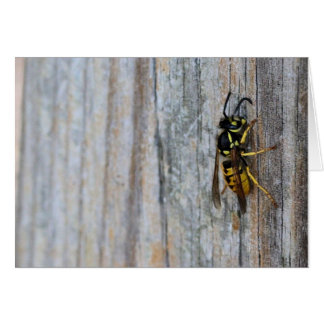 Yellow Jacket Notecards Greeting Card