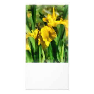 Yellow Japanese Irises Custom Photo Card