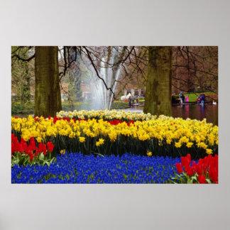 yellow Keukenhof gardens, Amsterdam, Netherlands f Poster