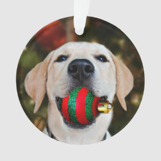 Yellow lab Christmas ball