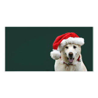 Yellow Lab Christmas Card