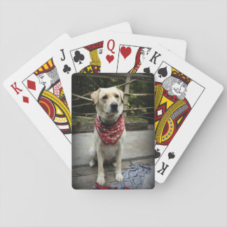 Yellow lab dog photo playing cards
