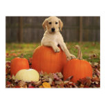 Yellow Lab in the Fall Postcard