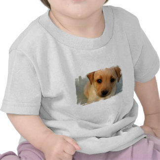 Yellow Lab Puppy Baby T-Shirt