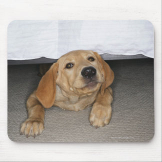 Yellow lab puppy stuck under bed mouse pad