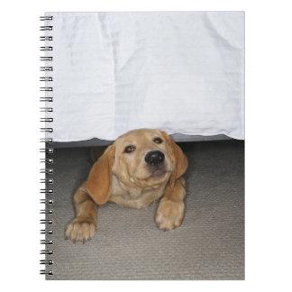 Yellow lab puppy stuck under bed notebooks