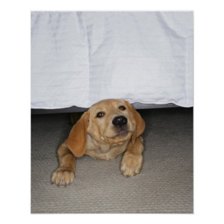 Yellow lab puppy stuck under bed poster