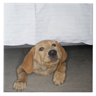 Yellow lab puppy stuck under bed tile