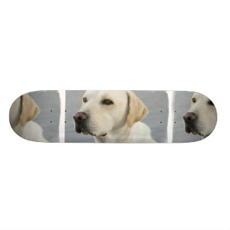 Yellow Lab  Skateboard