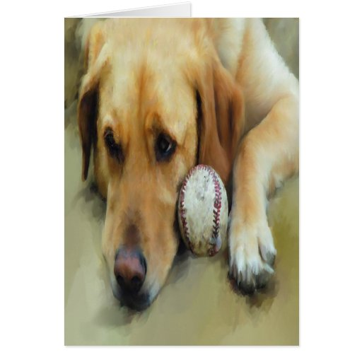 Yellow Lab Waiting To Play Card