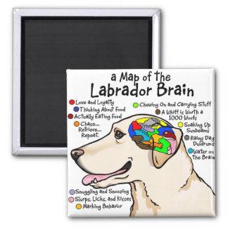 Yellow Labrador Brain Atlas Square Magnet