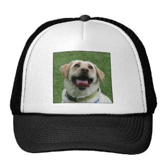 Yellow Labrador cap