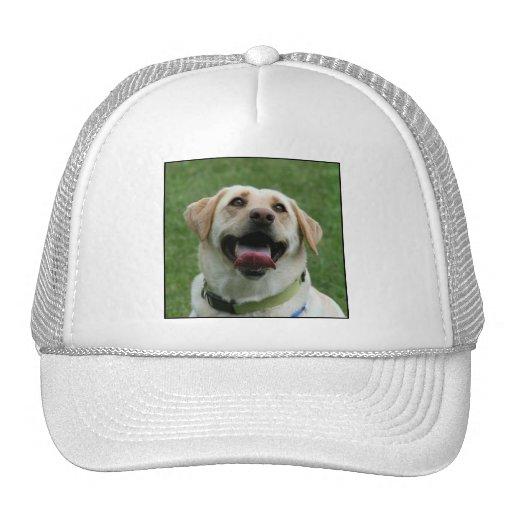 Yellow Labrador Hat