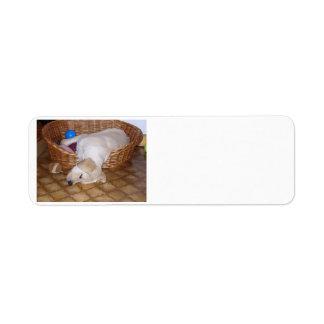 yellow labrador pup.png return address label