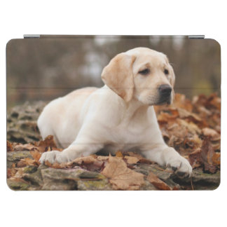 Yellow Labrador Puppy In Autumn iPad Air Cover