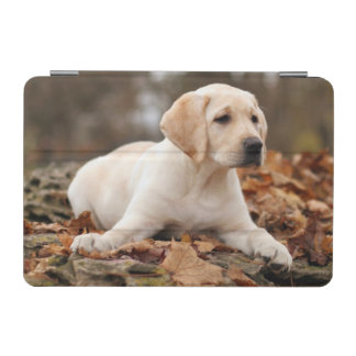 Yellow Labrador Puppy In Autumn iPad Mini Cover