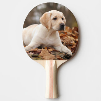 Yellow Labrador Puppy In Autumn Ping Pong Paddle