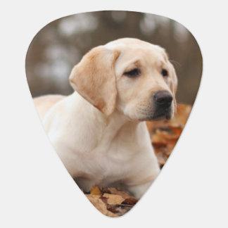 Yellow Labrador Puppy In Autumn Plectrum