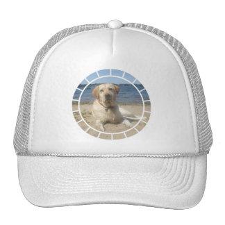 Yellow Labrador Retriever Baseball Hat