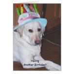 Yellow Labrador Retriever in Birthday Hat Greeting Card