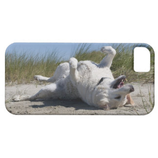 Yellow Labrador Retriever iPhone 5 Cover