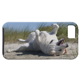 Yellow Labrador Retriever iPhone 5 Covers