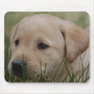Yellow Labrador Retriever mouse pad