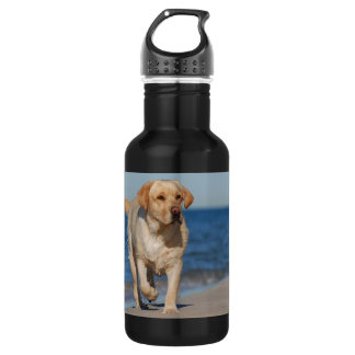 Yellow labrador retriever on the beach 532 ml water bottle