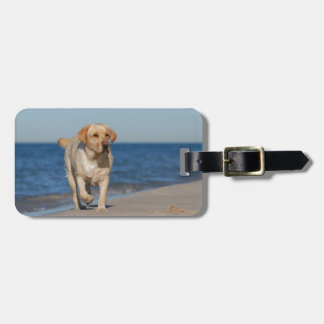 Yellow labrador retriever on the beach bag tags