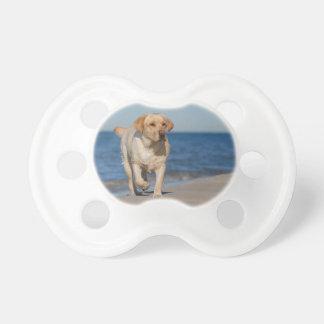 Yellow labrador retriever on the beach pacifiers