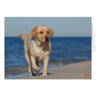 Yellow labrador retriever on the beach greeting card