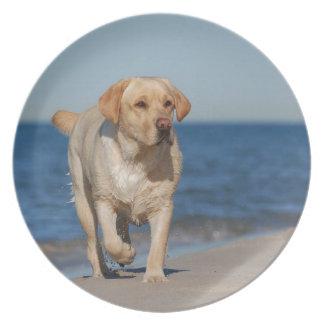 Yellow labrador retriever on the beach plate