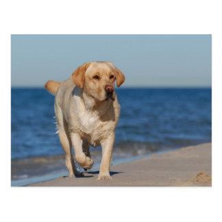 Yellow labrador retriever on the beach postcard