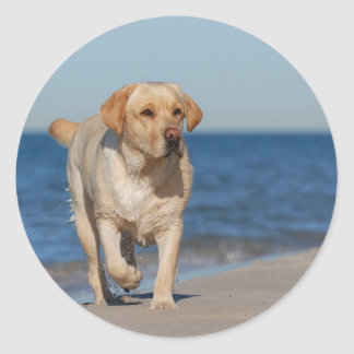 Yellow labrador retriever on the beach round sticker