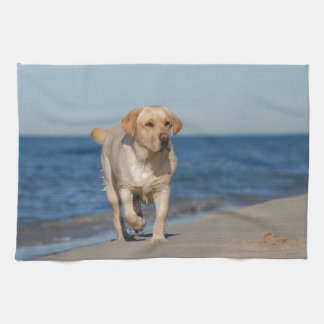 Yellow labrador retriever on the beach towel