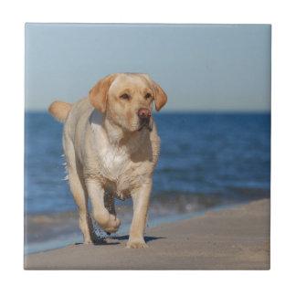 Yellow labrador retriever on the beach small square tile