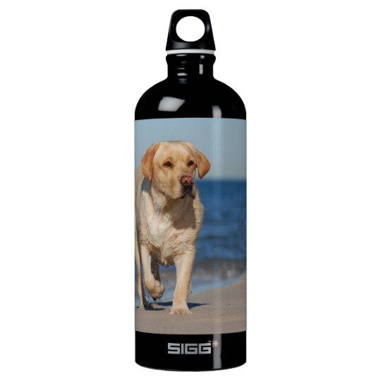 Yellow labrador retriever on the beach water bottle